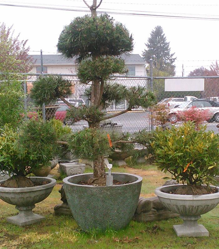 Pottery tree planters portland garden decor for Garden pots portland